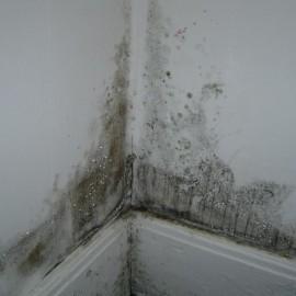 Dlaczego na ścianach pojawia się grzyb?